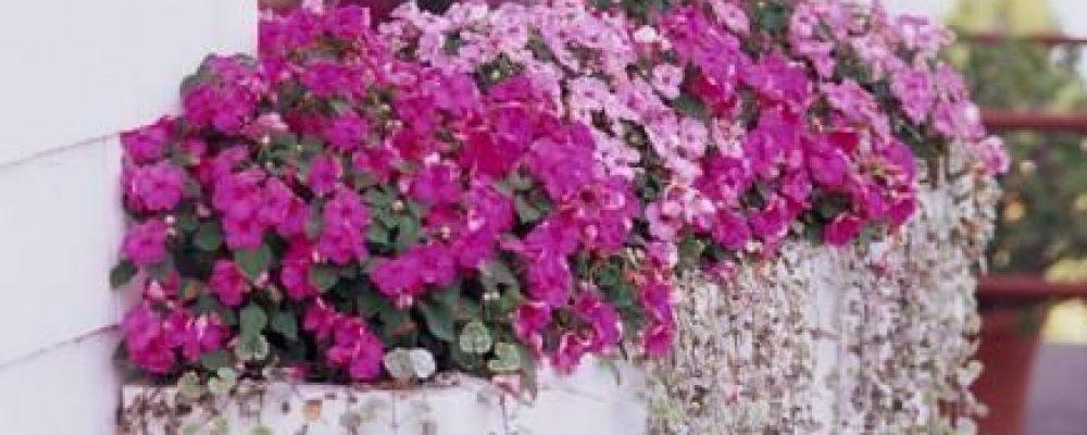 Υπέροχες ιδέες για να διακοσμήσετε τα παράθυρά σας με φυτά