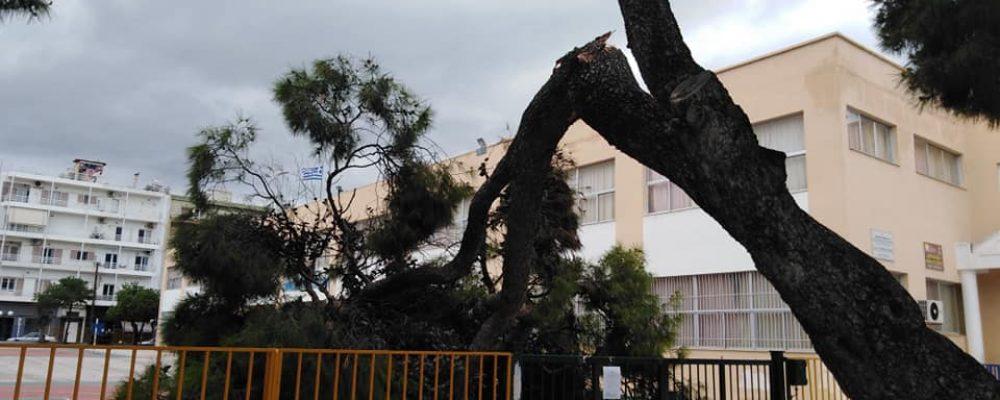 Δυνατοί άνεμοι έριξαν δενδρο στην Κόρινθο