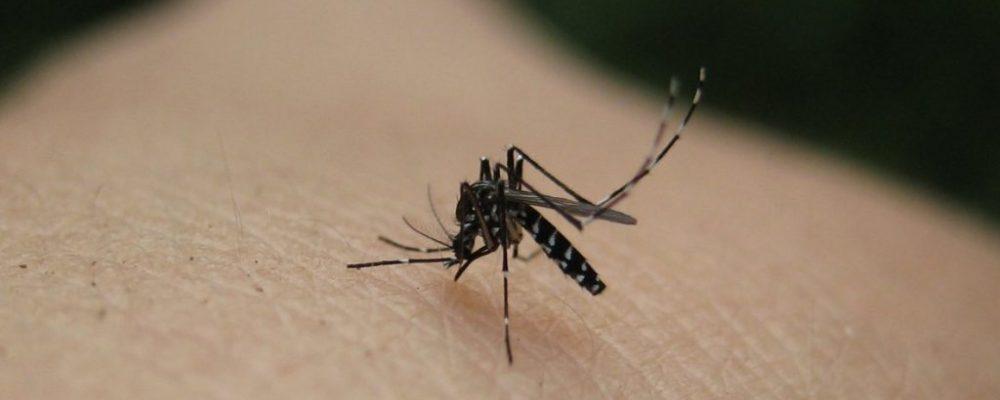 Το «κόλπο» για να μην σας τσιμπούν τα κουνούπια