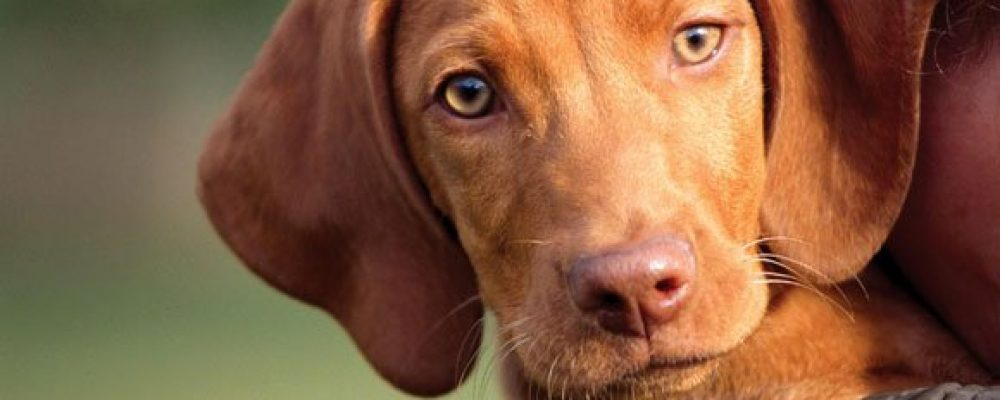 Οι σκύλοι οσμίζονται με ακρίβεια την ύπαρξη καρκίνου
