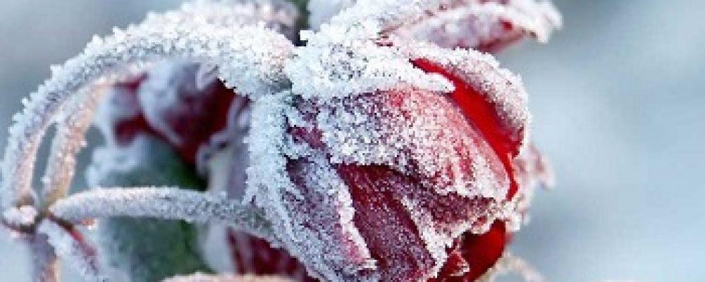 Δείτε πως θα προστατέψτε τα φυτά  από τον επικείμενο χιονιά που έρχεται