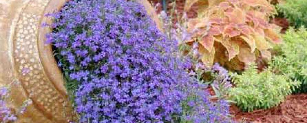 10 φανταστικές ιδέες για να διακοσμήσεις τον κήπο σου με απλά υλικά!