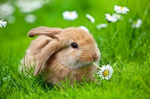 easter-bunny-we-heart-it-meadow-cute-adorable-animal