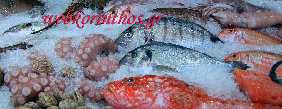 fish-480830_960_720