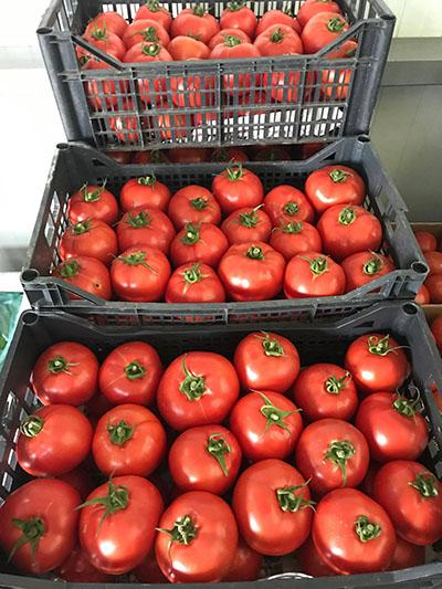 tomatos2